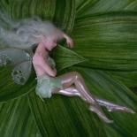 エルフと妖精
